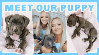 WE GOT A PUPPY!!! (SURPRISE MUM)