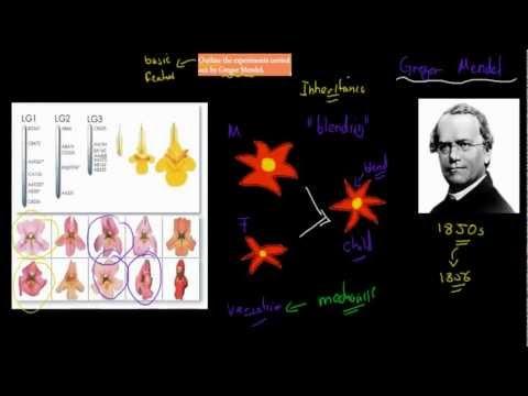 1. Gregor Mendel's experiment (HSC biology)
