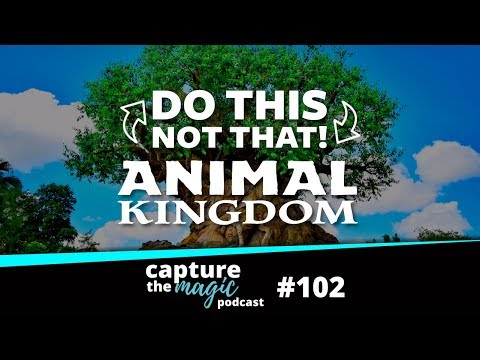 Do This, Not That - Animal Kingdom | Capture The Magic Podcast - Ep 102