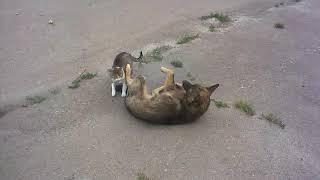 Кот ебет собаку