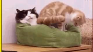 Смешные кошки Видео о животных для детей и не толко Создай себе хорошее настроение(Прикольные животные.Смешное видео о животных.Подборка интересных и забавных кадров.Поднимите себе настрое..., 2016-12-18T05:51:18.000Z)
