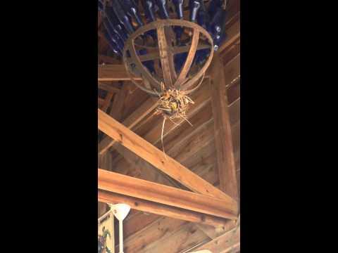 De Sprenkeltjes - Vogels bouwen nestje in lamp
