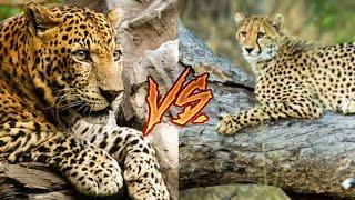 Леопард против Гепарда