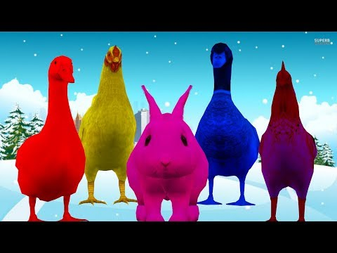 Learn Animals Rooster Ducks and Hen Colorful Video for Kids || Finger Family Nursery Rhyme Song thumbnail