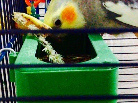 Какие кормушки для попугаев лучше. Посылка с кормушками из Китая. Новая кормушка-бассейн.