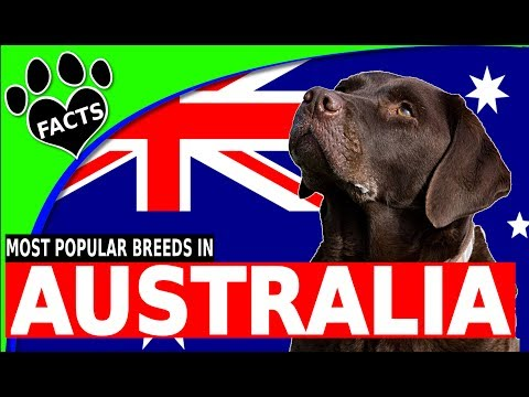 TopTenz: Top 10 Most Popular Dog Breeds in Australia 2017 - Animal Facts