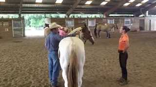 Lateral flexion with Warwick 2013. With leased horse, CJ.