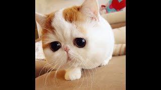 Веселые котики экзотики: подборка видео приколов со смешными кошками