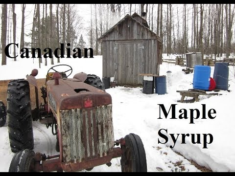 Making Maple Syrup In Canada