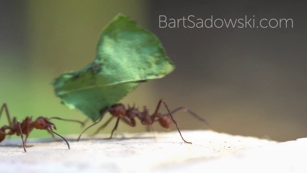 Working Ants Stock Footage Sample Youtube