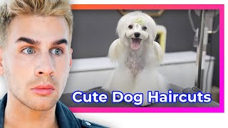 Hairdresser reacts to cขte dog haircuts