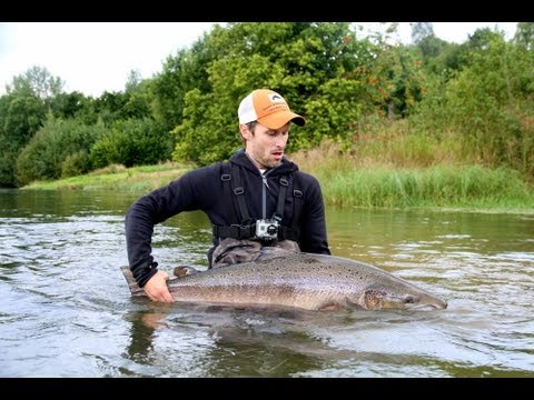 Gloppen river salmon 115 cm fly fishing youtube for Salmon river ny fishing regulations