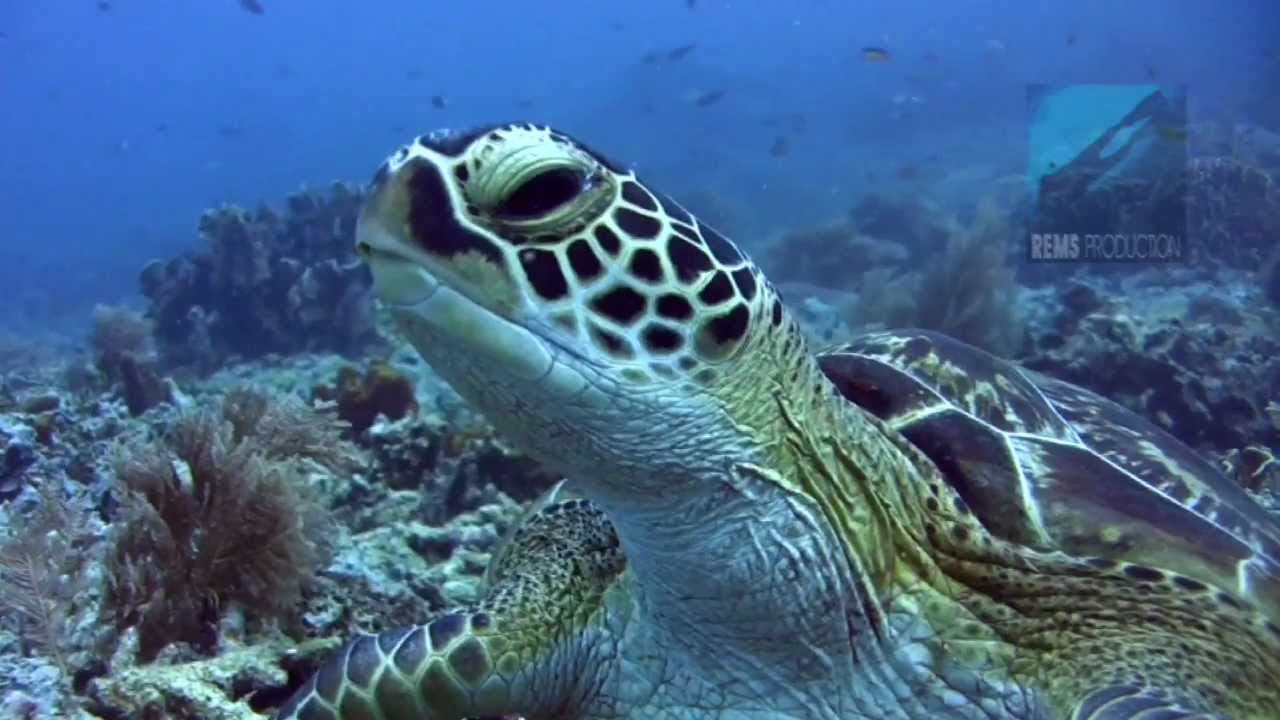 Best Diving Island In Indonesia