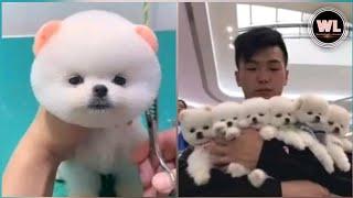 كلاب صغيرة مرحة وذكية smart and fun baby dogs