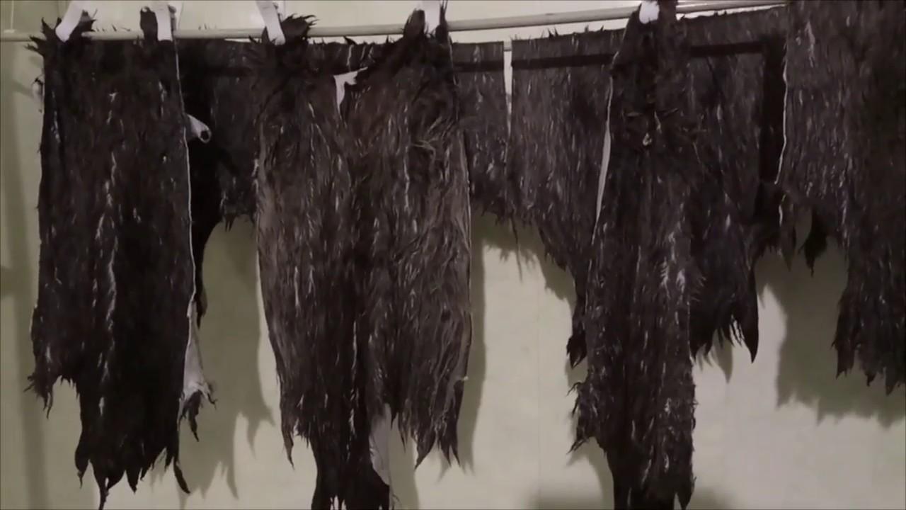 Как мыть овечью шерсть (руно). - YouTube
