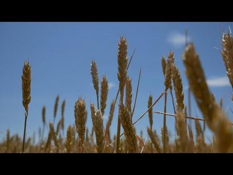 Луга и травы