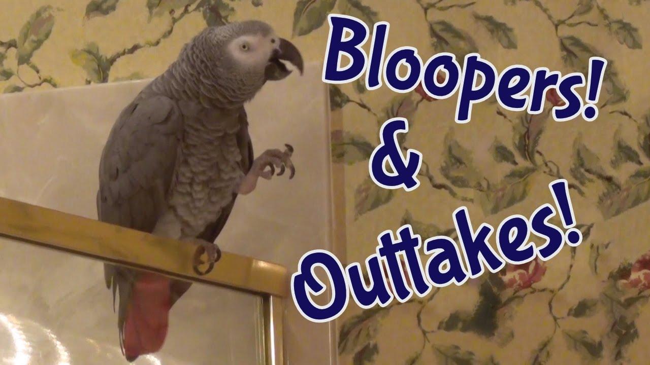 Download Einstein talking parrot hilariously mispronounces words