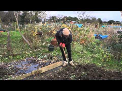 Allotment Diaries - Martha's Winter Harvest