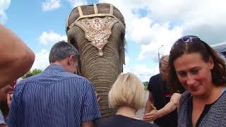 Слон убирает улицу