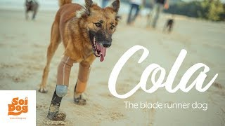A journey to being a dog again | Cola the Blade Runner Dog