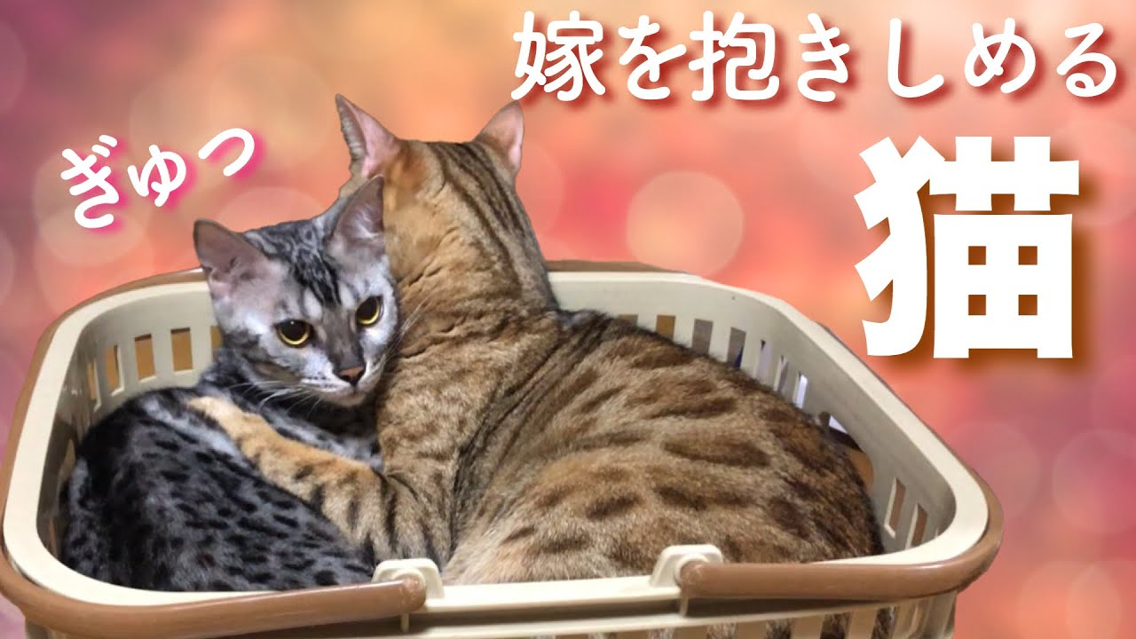 愛を知る猫 愛された猫
