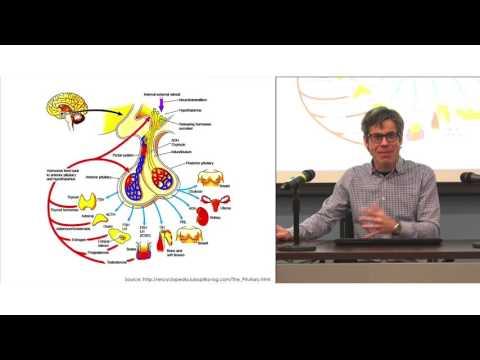 Conférence ISS: «Conséquences à long terme de l'exposition précoce aux perturbateurs endocriniens sur la santé humaine: de la tête aux pieds!» - Partie 1