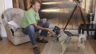 Dima Yeremenko Explains Hand Feeding For Naturally Happy Dogs