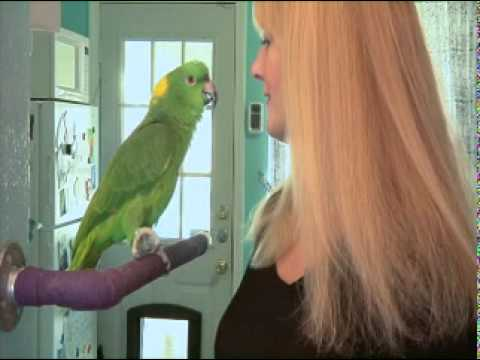 Train Your Parrot to Talk DVD Preview