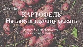 Как лучше картошку посадить #картофельпосадка