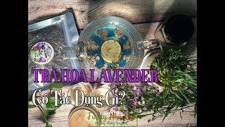 TRÀ HOA LAVENDER CÓ TÁC DỤNG GÌ? - What Is Lavender Tea Good For?
