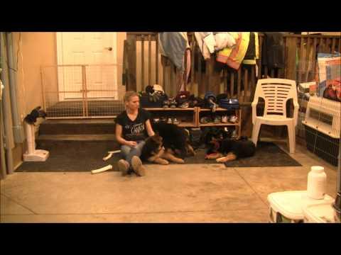 Elhart K 9's Puppy Training, Behavior. and Crate Tips