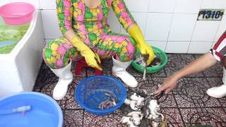 Frogs  having legs chopped off, gross!! VIETNAM