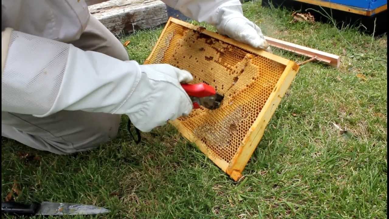 Delicieux How To Transfer Brood Comb From Langstroth Frames To A New Top Bar Hive