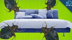 Top 10 US Cities Infested With Bedbugs