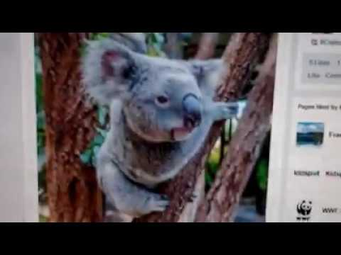 Australia Zoo Hiring Expatriate Worker Sonali In Australia