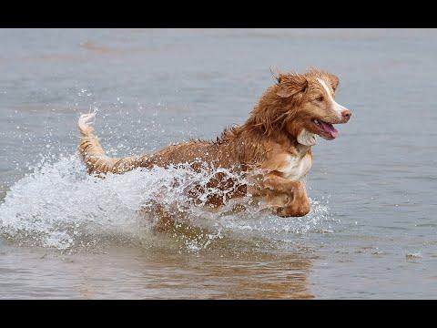 22 Water Dog Breeds