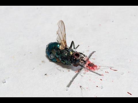 Bug-A-Salt Slow Motion 5000 fps