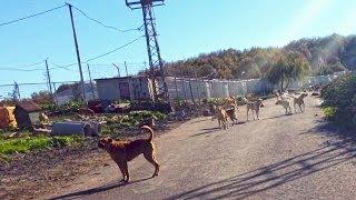 Bisiklet üzerinde Yüzlerce köpekle karşılaşmaca