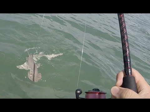 SHARK!! and Flying Ballyhoo Smack into the boat!!, First Post Irma Fishing Trip