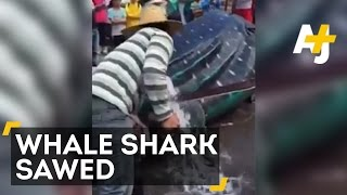 Two Men Cut Giant Whale Shark Into Pieces While It