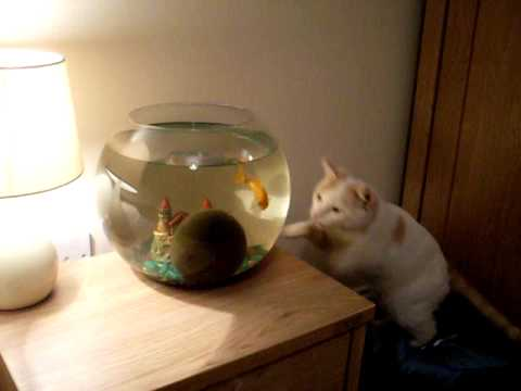 Cat V's Fishbowl