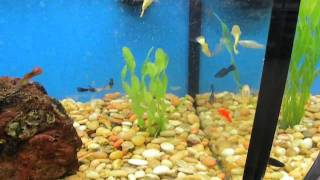 Fish Of The Day Ep.5 Tons Of Plecostomus's