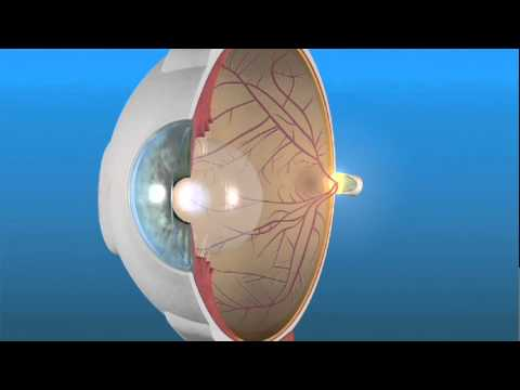 How the Eye Works and the Retina