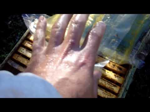Как отмыть руки от прополиса