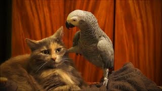 Funny Animals Doing Funny Things 2019 #2