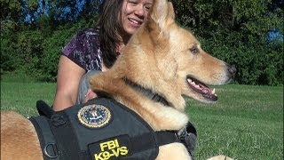 Meet Dolce, The Fbi's First Therapy Dog