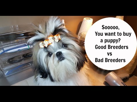 How To Buy A Puppy From A GOOD Breeder