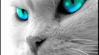 Самая знаменитая Кошка!!!!
