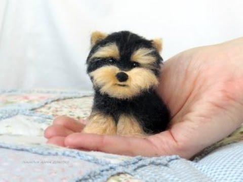 карманные собачки фото