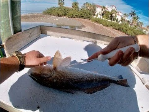 How To Clean A Redfish (Red Drum)